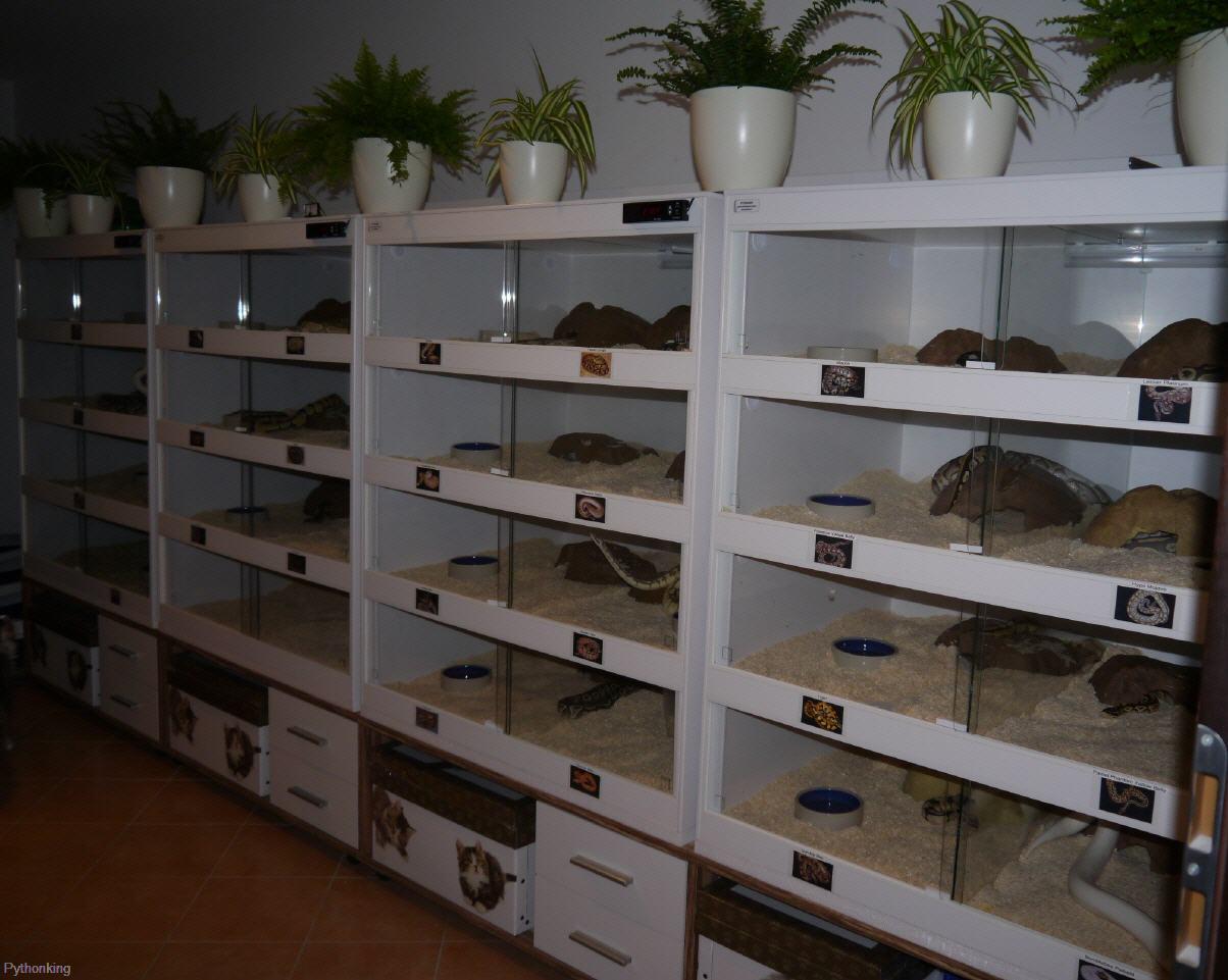 pythonking kunststoffterrarien racks zubeh r brutapparat tageslichtlampen heizmatten. Black Bedroom Furniture Sets. Home Design Ideas